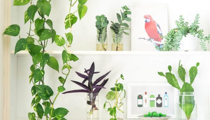 Indoor Plants and Feng Shui Creating Great Chi